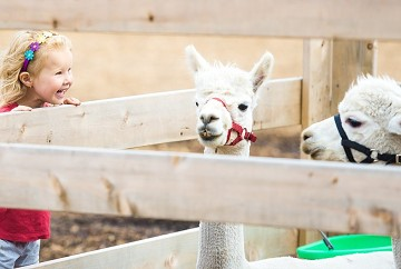 The Farm Business Innovation Show : Petting Zoo Diversification Tips: Health and Safety Measures to Remember