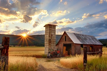 The Farm Business Innovation Show : Farm Diversification Ideas: Real Stories From Real Farmers